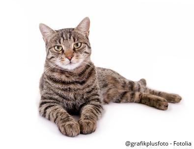 Katzenurin Entfernen Mit Diesen Tipps Kein Problem Geruchskontroll